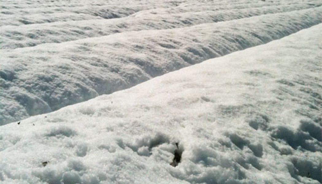 お茶畑でも一面雪景色