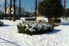 狭山で今年一番の積雪