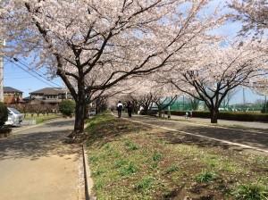 i-Sayama 2014桜