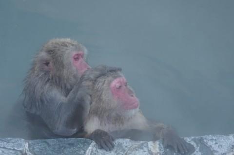 来年の主役、温泉でのんびり 狭山智光山公園こども動物園