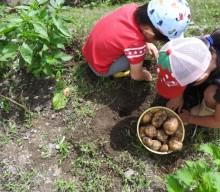 狭山市で家庭菜園を!無料で利用できる畑の使用者を募集中。