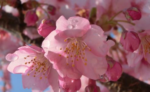 春の素敵なコラボがみられます。