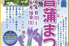 「花菖蒲まつり」開催