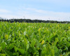 狭山茶の農業遺産認定を目指す「狭山茶農業遺産推進協議会」設立
